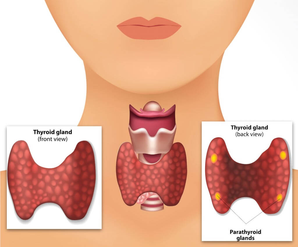 Symptoms of thyroid in women during hypothyroidism