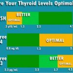 Thyroid Hormone Synthesis Functions Levels Effects Diseases & Importance of T3 T4 TSH