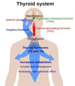 thyroid storm hormone t4 to t3 conversion