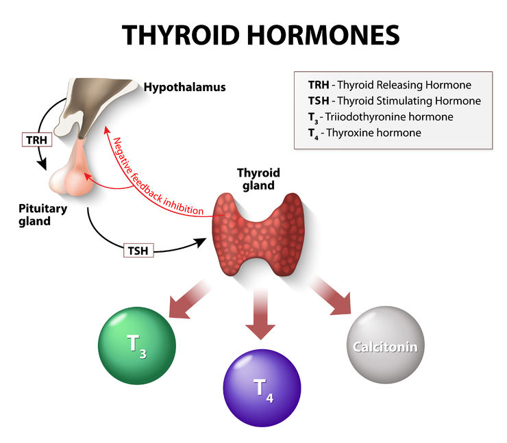 Thyroid hormones causes symptoms and treatment of papillary thyroid carcinoma