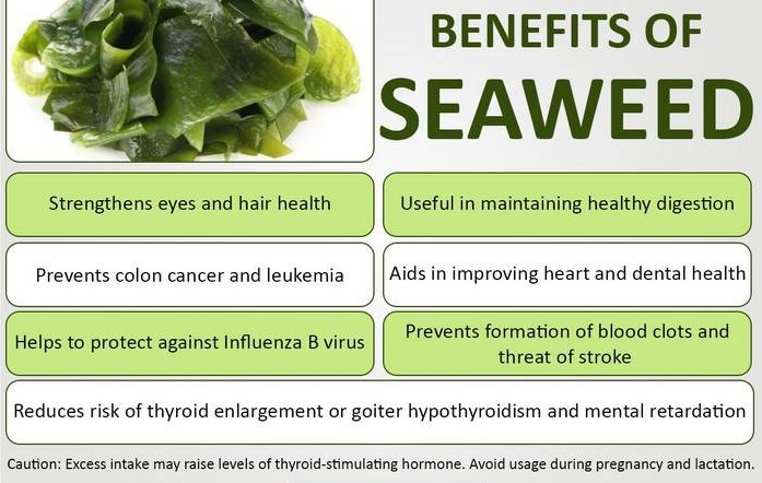 seaweed as hypothyroidism diet