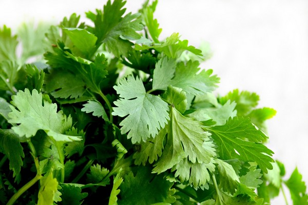 Coriander - Best Food For Hair Growth