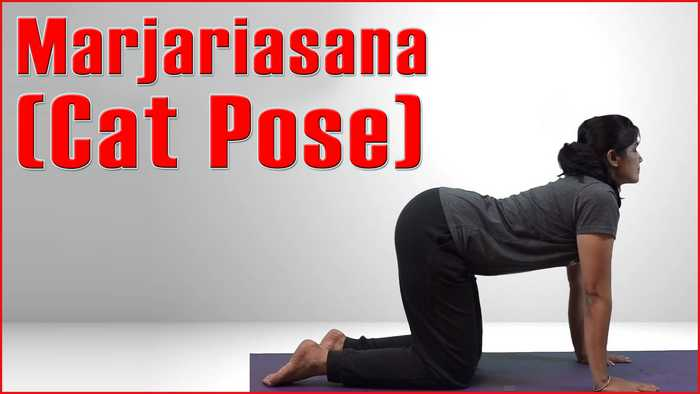 Yoga for Pregnancy First Trimester-Marjariasana